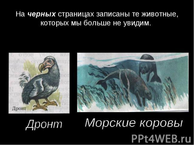На черных страницах записаны те животные, которых мы больше не увидим. ДронтМорские коровы