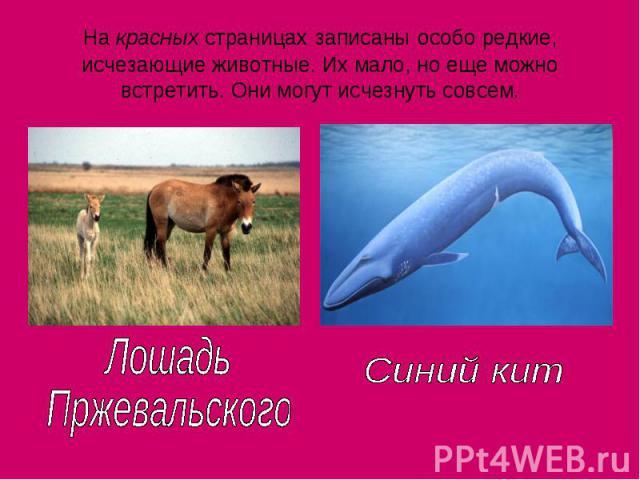На красных страницах записаны особо редкие, исчезающие животные. Их мало, но еще можно встретить. Они могут исчезнуть совсем. ЛошадьПржевальскогоСиний кит