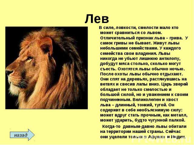 Лев В силе, ловкости, смелости мало кто может сравниться со львом. Отличительный признак льва – грива. У самок гривы не бывает. Живут львы небольшими семействами. У каждого семейства свои владения. Львы никогда не убьют лишнюю антилопу, добудут мяса…