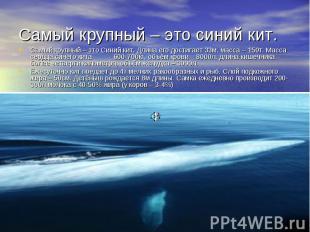 Самый крупный – это синий кит. Самый крупный – это Синий кит. Длина его достигае