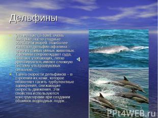 Дельфины Это мелкие (1-10м), очень быстрые, часто стадные обитатели морей. Наибо
