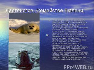 Ластоногие. Семейство Тюлени. Также живут в воде, но часть времени проводят и на