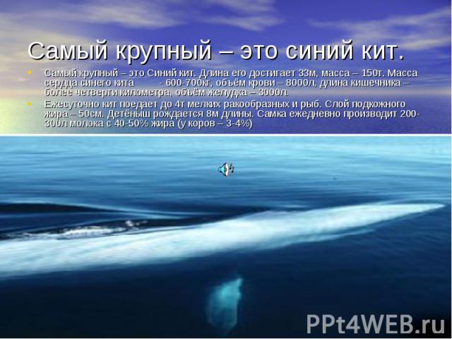 Самый крупный – это синий кит. Самый крупный – это Синий кит. Длина его достигает 33м, масса – 150т. Масса сердца синего кита - 600-700кг, объём крови – 8000л, длина кишечника – более четверти километра, объём желудка – 3000л.Ежесуточно кит поедает …
