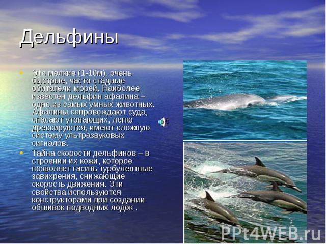 Дельфины Это мелкие (1-10м), очень быстрые, часто стадные обитатели морей. Наиболее известен дельфин афалина – одно из самых умных животных. Афалины сопровождают суда, спасают утопающих, легко дрессируются, имеют сложную систему ультразвуковых сигна…