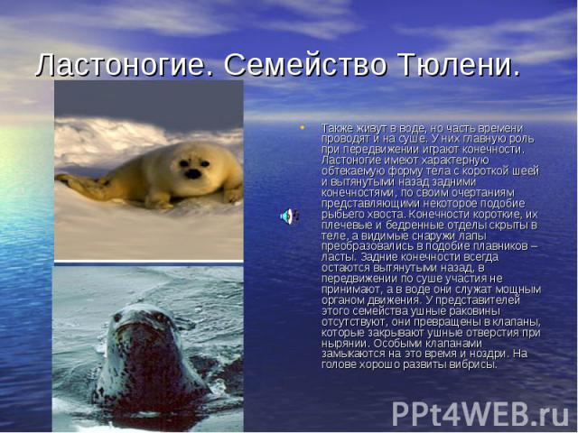 Ластоногие. Семейство Тюлени. Также живут в воде, но часть времени проводят и на суше. У них главную роль при передвижении играют конечности. Ластоногие имеют характерную обтекаемую форму тела с короткой шеей и вытянутыми назад задними конечностями,…