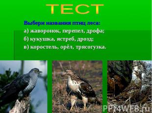 ТЕСТ Выбери названия птиц леса:а) жаворонок, перепел, дрофа;б) кукушка, ястреб,