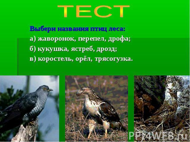 ТЕСТ Выбери названия птиц леса:а) жаворонок, перепел, дрофа;б) кукушка, ястреб, дрозд;в) коростель, орёл, трясогузка.