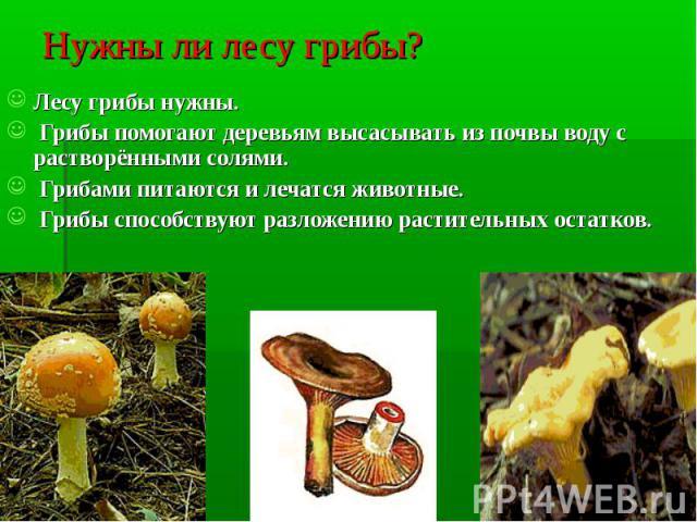 Нужны ли лесу грибы? Лесу грибы нужны. Грибы помогают деревьям высасывать из почвы воду с растворёнными солями. Грибами питаются и лечатся животные. Грибы способствуют разложению растительных остатков.