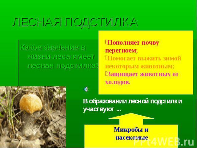 ЛЕСНАЯ ПОДСТИЛКА Какое значение в жизни леса имеет лесная подстилка?Пополняет почву перегноем;Помогает выжить зимой некоторым животным;Защищает животных от холодов.В образовании лесной подстилки участвуют ...Микробы и насекомые