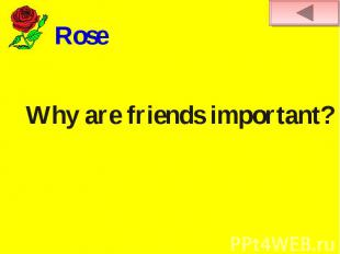 RoseWhy are friends important?