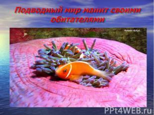Подводный мир манит своими обитателями