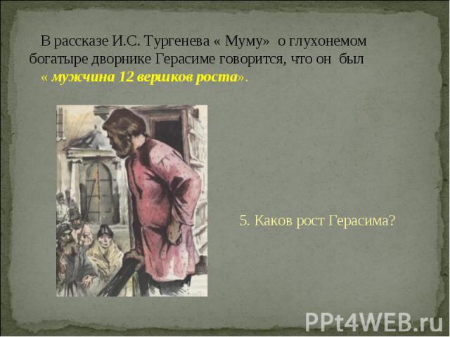 В рассказе И.С. Тургенева « Муму» о глухонемом богатыре дворнике Герасиме говорится, что он был « мужчина 12 вершков роста». 5. Каков рост Герасима?