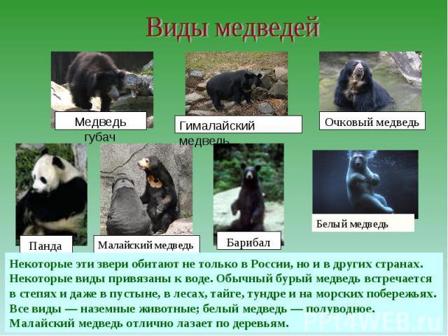 Виды медведейНекоторые эти звери обитают не только в России, но и в других странах.Некоторые виды привязаны к воде. Обычный бурый медведь встречается в степях и даже в пустыне, в лесах, тайге, тундре и на морских побережьях. Все виды — наземные живо…
