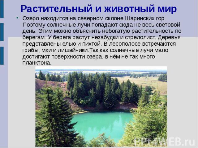 Растительный и животный мир Озеро находится на северном склоне Шаринских гор. Поэтому солнечные лучи попадают сюда не весь световой день. Этим можно объяснить небогатую растительность по берегам. У берега растут незабудки и стрелолист. Деревья предс…