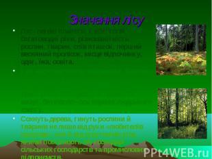 Значення лісу Ліс - легені планети, хлібні поля, багатоводні ріки, різноманітніс
