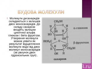 Молекули дисахаридів складаються з залишків двох моносахаридів. До складу сахаро