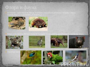 Флора и фауна Австралия - единственная страна, в которой сохранились утконосы и