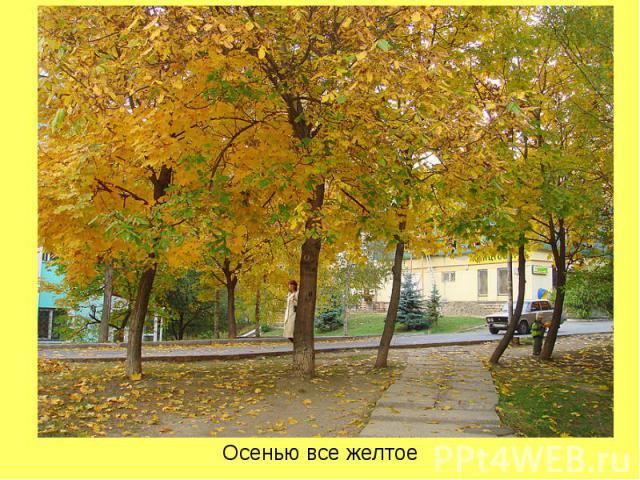 Осенью все желтое Осенью все желтое