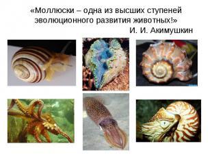 «Моллюски – одна из высших ступеней эволюционного развития животных!» И. И. Аким