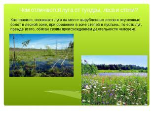 Чем отличаются луга от тундры, леса и степи? Как правило, возникают луга на мест