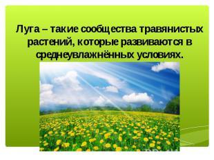 Луга – такие сообщества травянистых растений, которые развиваются в среднеувлажн