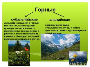Горные субальпийские - луга, встречающиеся в горных местностях, выше верхней гра