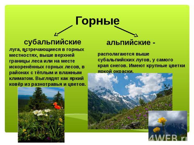 Горные субальпийские - луга, встречающиеся в горных местностях, выше верхней границы леса или на месте искоренённых горных лесов, в районах с тёплым и влажным климатом. Выглядят как яркий ковёр из разнотравья и цветов.альпийские - располагаются выше…