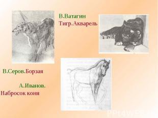 В.ВатагинТигр.АкварельВ.Серов.Борзая А.Иванов.Набросок коня