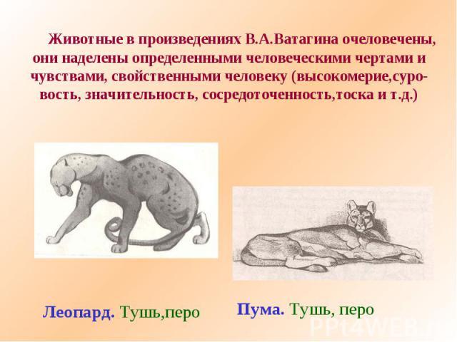 Животные в произведениях В.А.Ватагина очеловечены,они наделены определенными человеческими чертами ичувствами, свойственными человеку (высокомерие,суро-вость, значительность, сосредоточенность,тоска и т.д.)Леопард. Тушь,пероПума. Тушь, перо