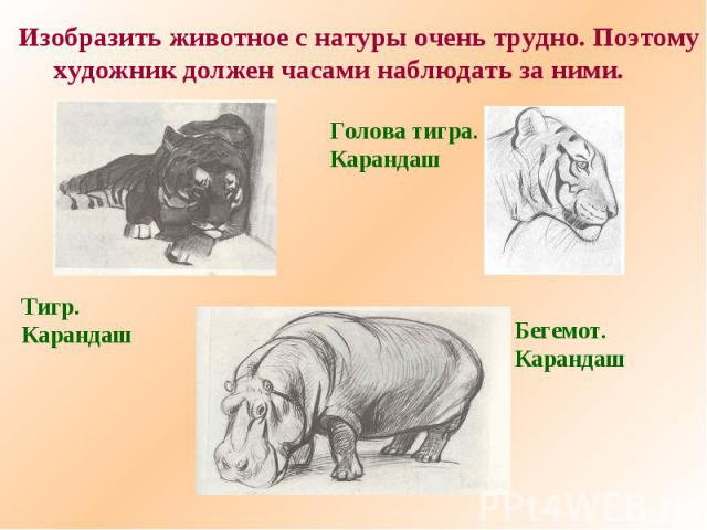 Изобразить животное с натуры очень трудно. Поэтомухудожник должен часами наблюдать за ними.Тигр.КарандашГолова тигра.КарандашБегемот.Карандаш