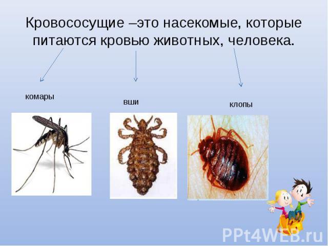 Кровососущие –это насекомые, которые питаются кровью животных, человека.
