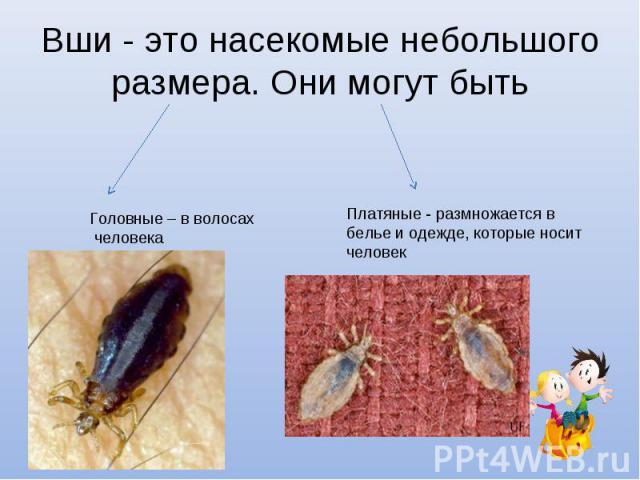 Вши - это насекомые небольшого размера. Они могут быть Головные – в волосах человекаПлатяные - размножается в белье и одежде, которые носит человек