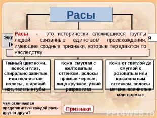 Расы Расы - это исторически сложившиеся группы людей, связанные единством происх