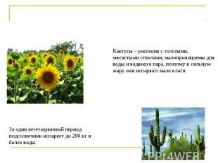 Кактусы – растения с толстыми, мясистыми стволами, малопроницаемы для воды и вод