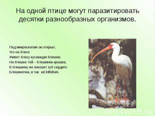 На одной птице могут паразитировать десятки разнообразных организмов. Под микрос