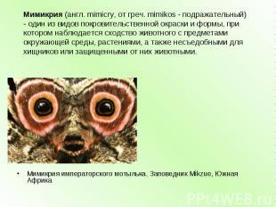 Мимикрия(англ. mimicry, от греч. mimikos - подражательный) - один из видов покр