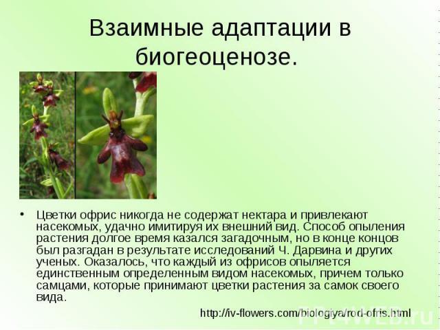 Взаимные адаптации в биогеоценозе. Цветки офрис никогда не содержат нектара и привлекают насекомых, удачно имитируя их внешний вид. Способ опыления растения долгое время казался загадочным, но в конце концов был разгадан в результате исследований Ч.…