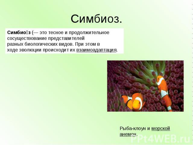 Симбиоз. Симбиоз(— это тесное и продолжительное сосуществование представителей разныхбиологическихвидов. При этом в ходеэволюциипроисходит ихвзаимоадаптация. Рыба-клоуниморской анемон.