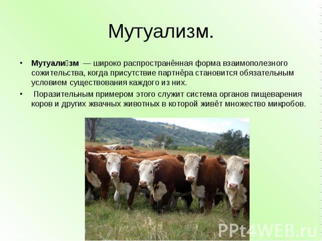 Мутуализм. Мутуализм— широко распространённая форма взаимополезного сожительства, когда присутствие партнёра становится обязательным условием существования каждого из них. Поразительным примером этого служит система органов пищеварения коров и др…