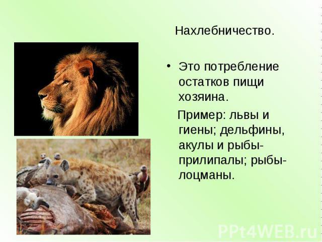 Нахлебничество. Это потребление остатков пищи хозяина. Пример: львы и гиены; дельфины, акулы и рыбы-прилипалы; рыбы-лоцманы.