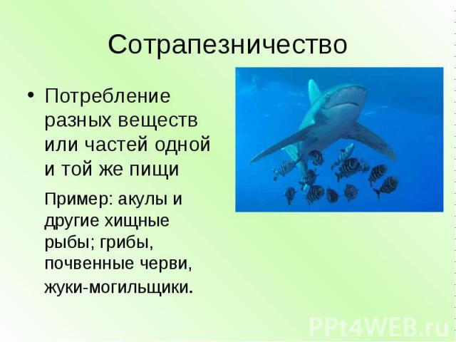 Сотрапезничество Потребление разных веществ или частей одной и той же пищи Пример: акулы и другие хищные рыбы; грибы, почвенные черви, жуки-могильщики.