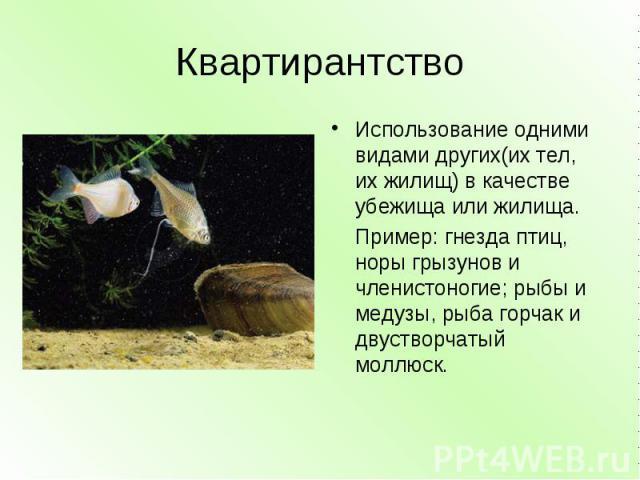Квартирантство Использование одними видами других(их тел, их жилищ) в качестве убежища или жилища. Пример: гнезда птиц, норы грызунов и членистоногие; рыбы и медузы, рыба горчак и двустворчатый моллюск.