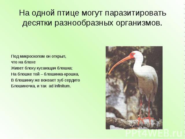 На одной птице могут паразитировать десятки разнообразных организмов. Под микроскопом он открыл,что на блохеЖивет блоху кусающая блошка;На блошке той – блошинка-крошка,В блошинку же вонзает зуб сердитоБлошиночка, и так ad infinitum.