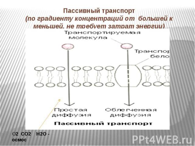 Пассивный транспорт(по градиенту концентраций от большей к меньшей, не требует затрат энергии)
