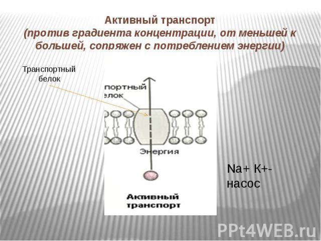 Активный транспорт(против градиента концентрации, от меньшей к большей, сопряжен с потреблением энергии)