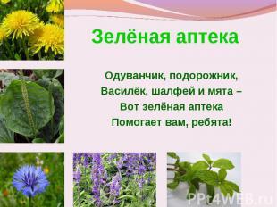 Зелёная аптека Одуванчик, подорожник,Василёк, шалфей и мята –Вот зелёная аптекаП