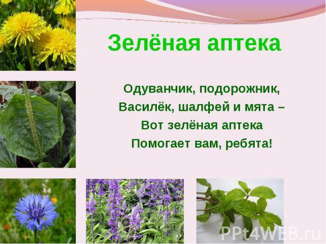 Зелёная аптека Одуванчик, подорожник,Василёк, шалфей и мята –Вот зелёная аптекаПомогает вам, ребята!