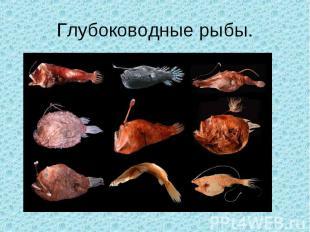 Глубоководные рыбы.