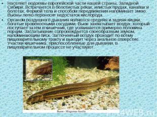 Населяет водоемы европейской части нашей страны, Западной Сибири. Встречается в