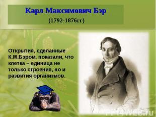 Карл Максимович Бэр (1792-1876гг)Открытия, сделанные К.М.Бэром, показали, что кл